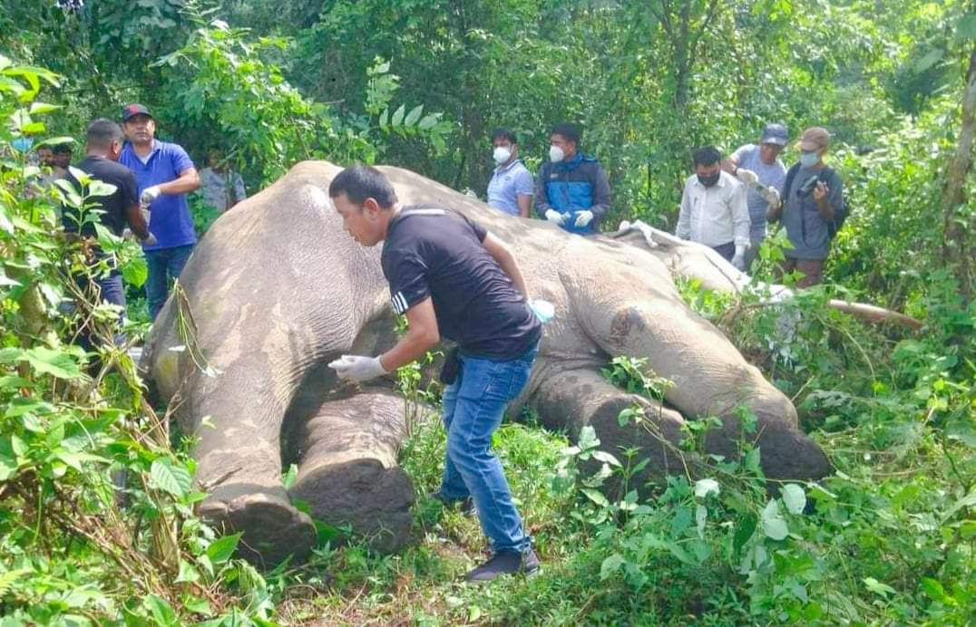झापाको सामुदायिक वनभित्र मृत हात्ती फेला