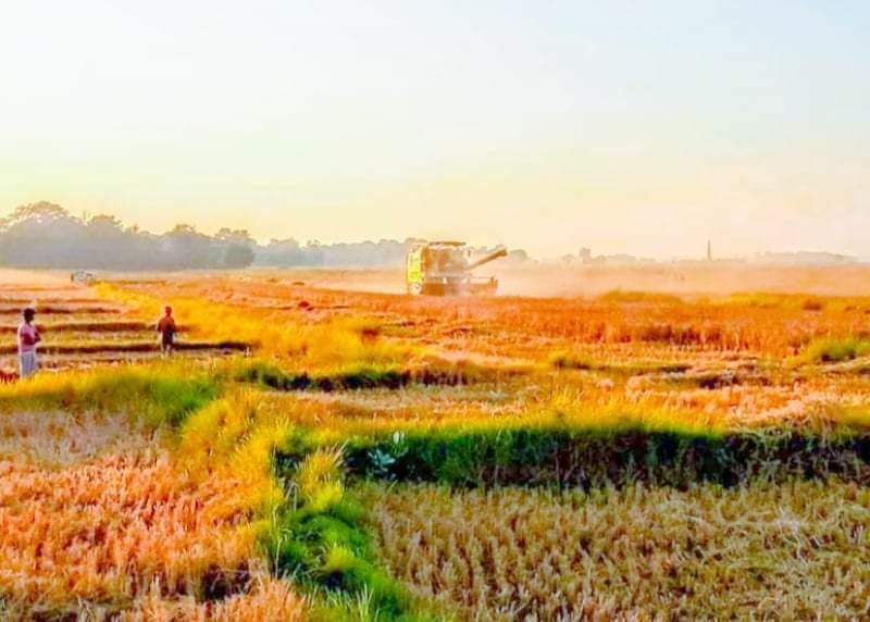 धान काट्ने मेसिन कम्बाइनद्वारा धान काट्दै किसानहरु खुशी