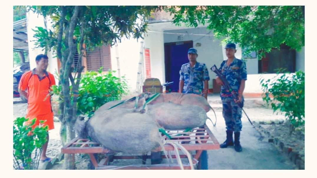 सशस्त्र प्रहरीले ३ जंगली बदेलसहित भारतिय मोटर साईकल पक्राउ