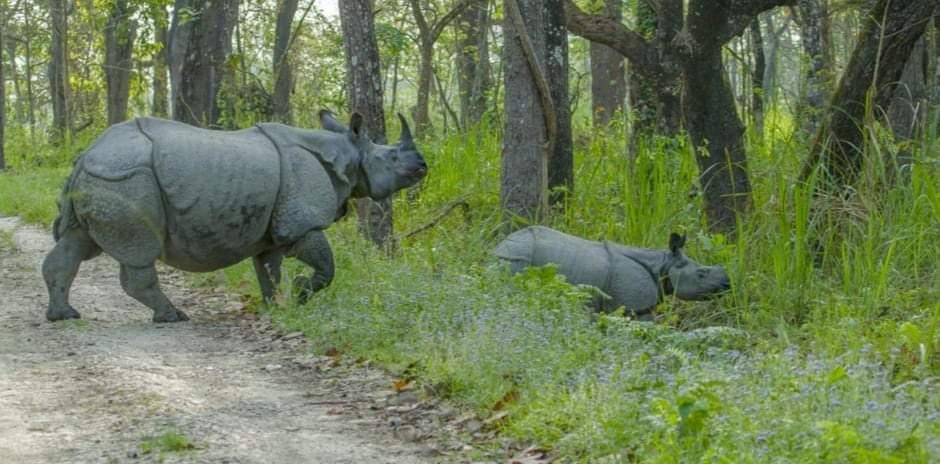 नेपालमा गैँडाको सङ्ख्या ७५२ पुग्यो ५ बर्षमा १०७ गैंडा बढेको तथ्यांक